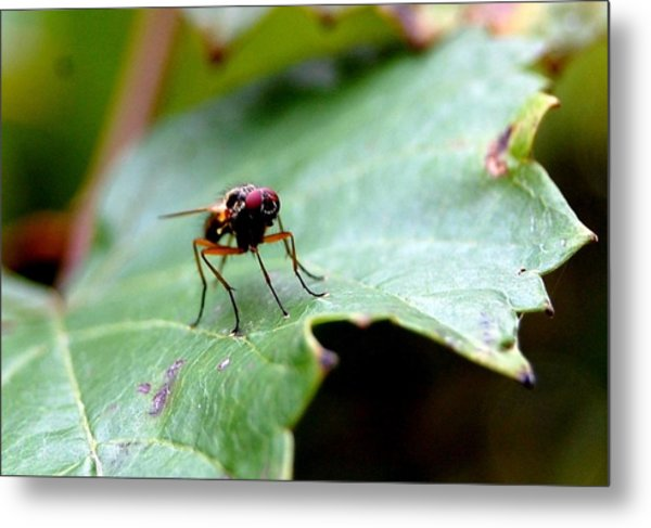 Fly Away Metal Print by Beverly Hammond