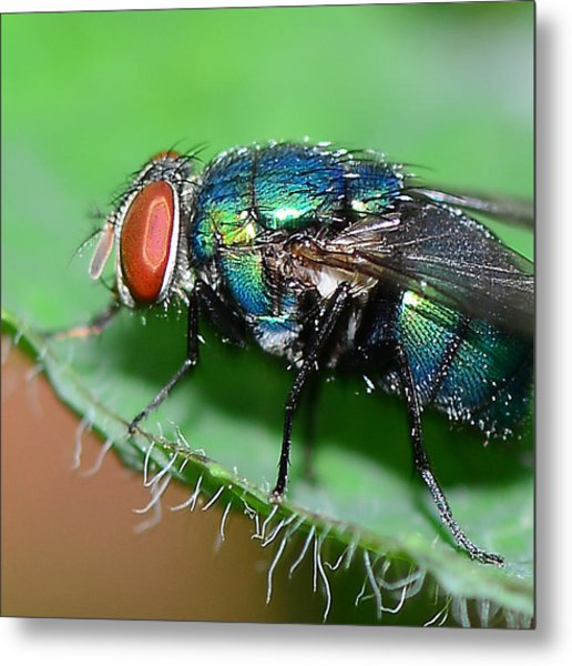 Fly Metal Print by Michelle Armstrong