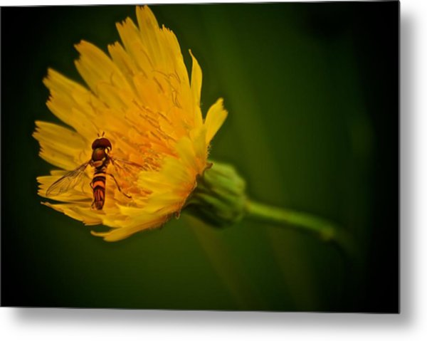 Fly On A Flower Metal Print