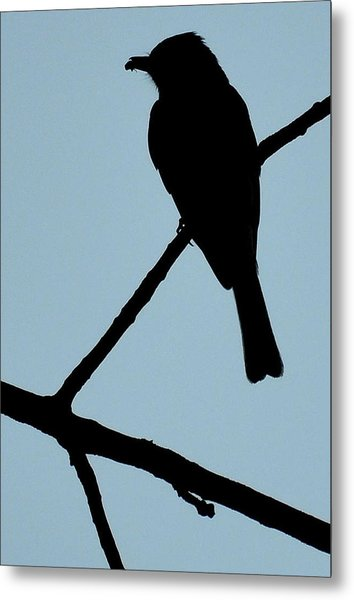 Flycatcher With Bug Metal Print