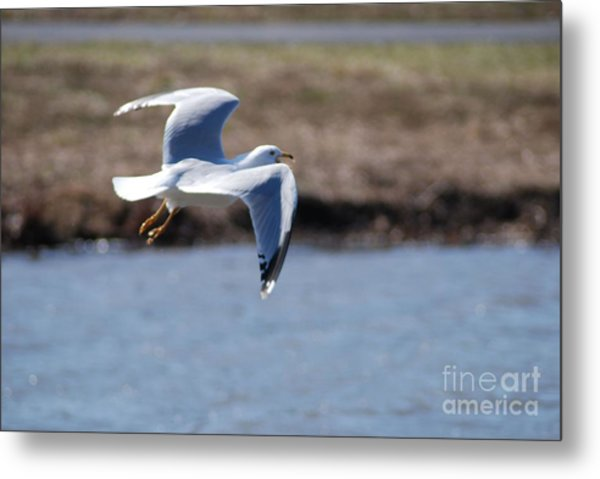 Flying Seagull Metal Print