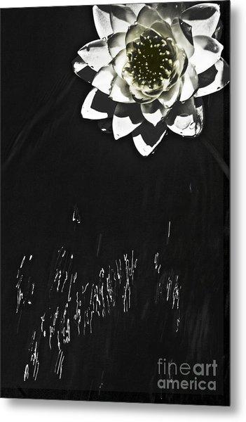 Flying Water Lily Metal Print