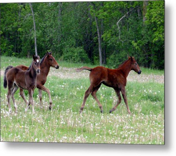 Foals In Dandelions Metal Print