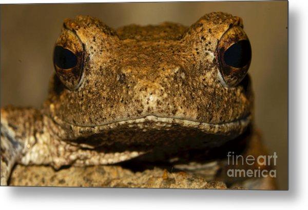 Foam Nesting Frog Metal Print