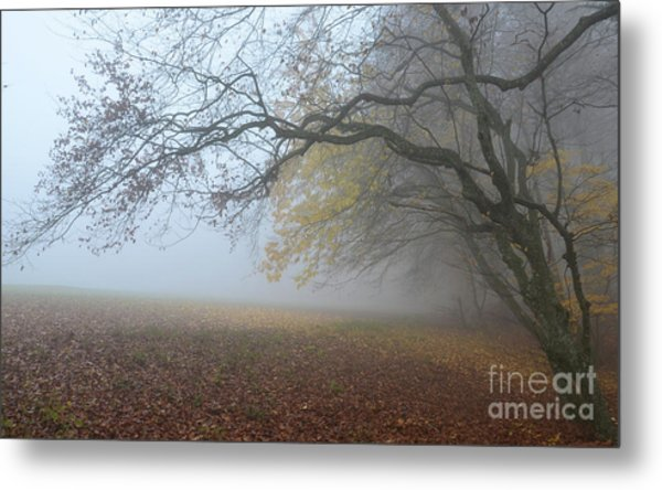 Fogy Forest In The Morning 1 Metal Print
