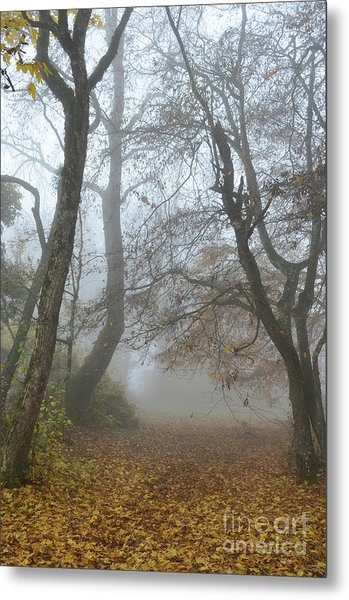 Fogy Forest In The Morning Metal Print