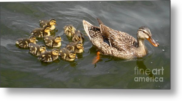 Follow The Leader Metal Print by Denise Hopkins