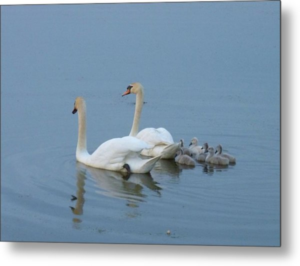 Following Mommy And Daddy Metal Print by Jeanette Oberholtzer