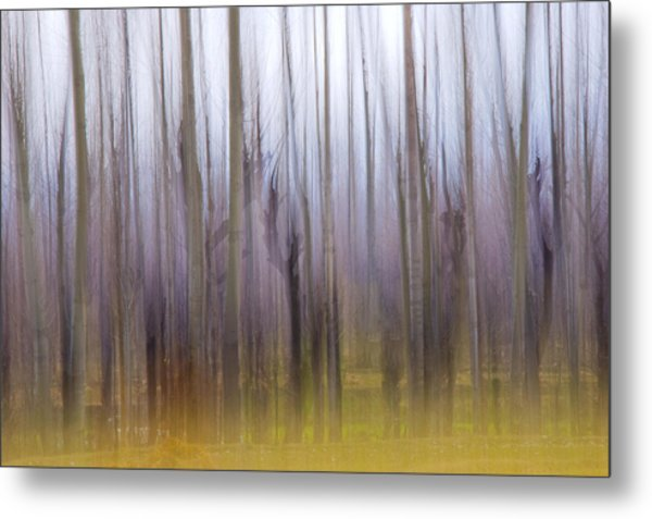 Forest Dream Metal Print
