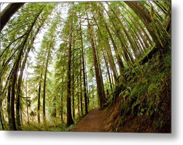 Metal Print featuring the photograph Forest Love by Margaret Pitcher