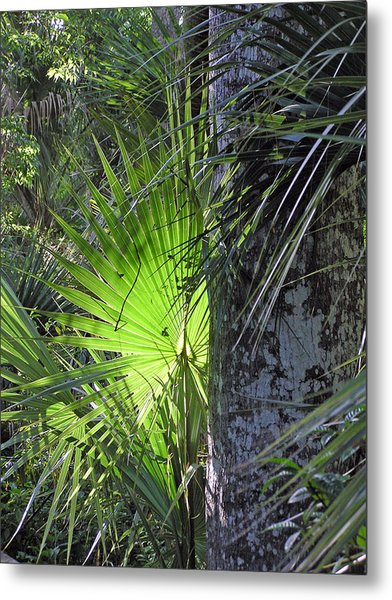 Forest Palm Metal Print