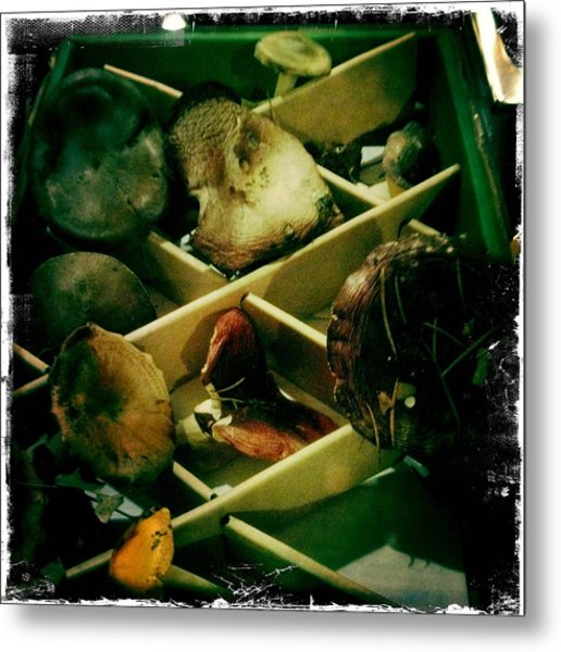 Forest Ranch Mushrooms Metal Print
