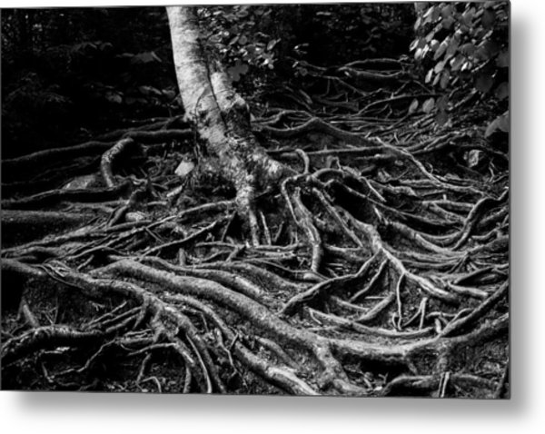 Root Detail Metal Print