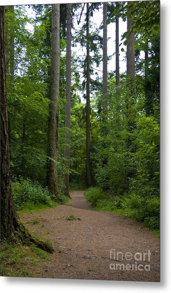 Forest Trail Metal Print by Ron Telford