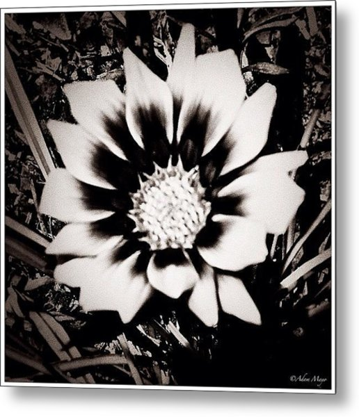 Formal Flower - Tuxed And Ready To Take Metal Print