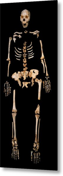 Fossilised Remains, Sima De Los Huesos Metal Print by Javier Truebamsf