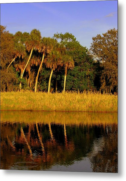 Four Palms Reflecting In Myakka Lake Metal Print