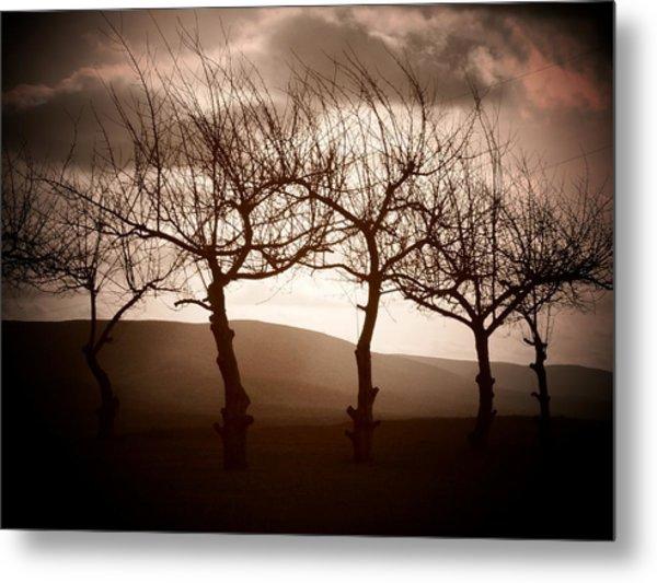 Four Trees Metal Print by Michael L Kimble
