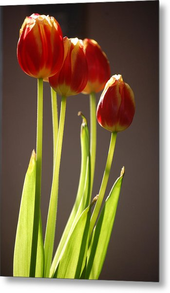 Four Tulips Metal Print by Dickon Thompson