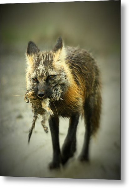 Foxes Dinner Metal Print
