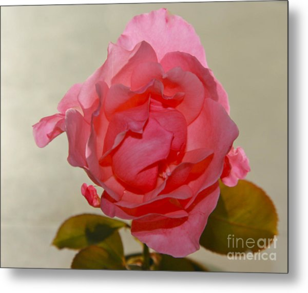 Fragile Pink Rose Metal Print