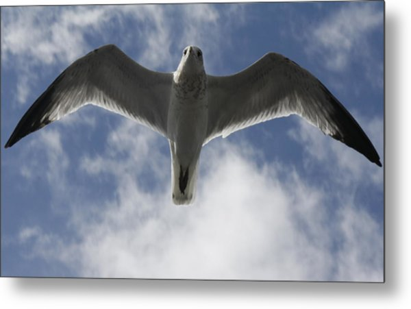 Freedom Metal Print by Natalija Wortman