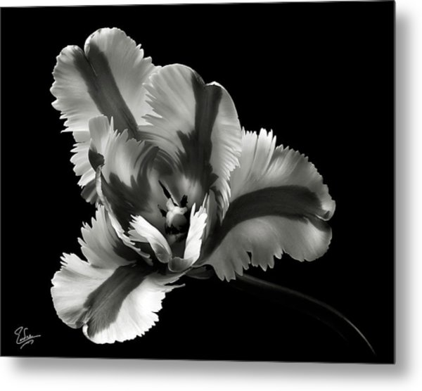 French Tulip In Black And White Metal Print