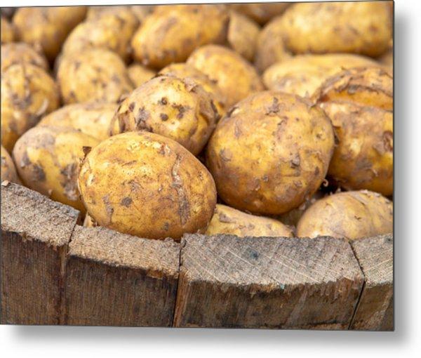 Freshly Harvested Potatoes In A Wooden Bucket Metal Print