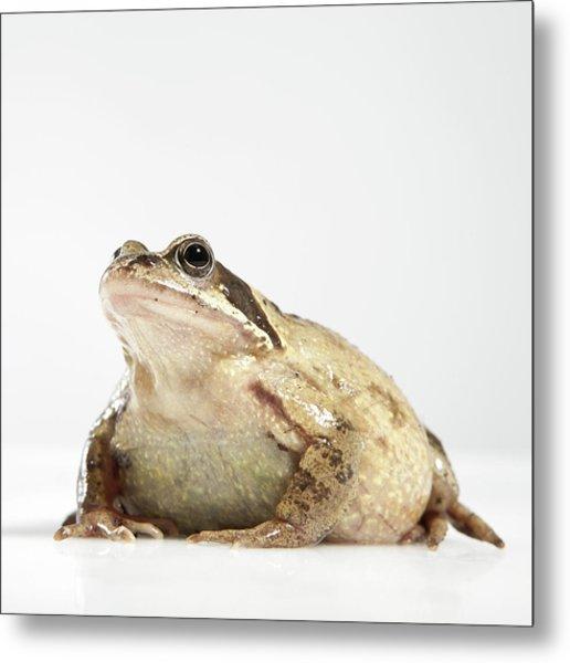 Frog Metal Print by Darren Woolridge Photography - www.DarrenWoolridge.com