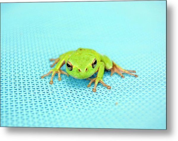 Frog Italy Metal Print