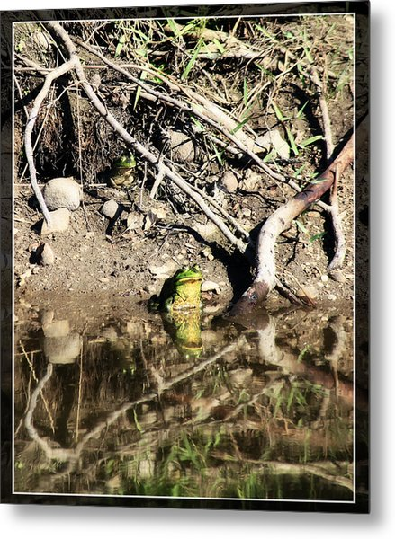 Frog King Metal Print