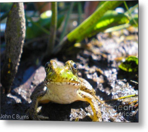 Frog Life Metal Print
