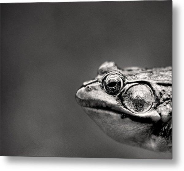 Frog Portrait Metal Print