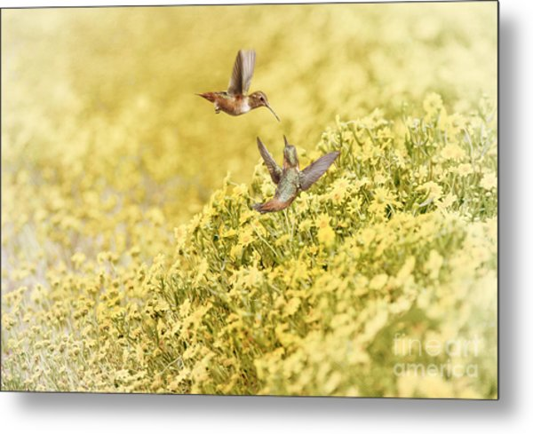 Frolic In The Garden Metal Print