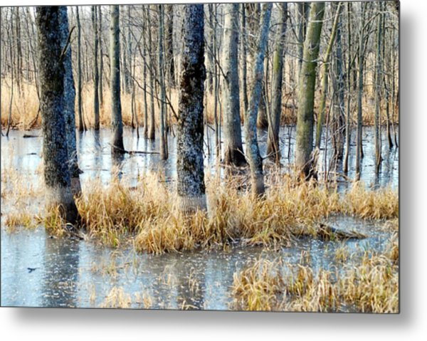 Frozen Forest Metal Print by Crissy Sherman