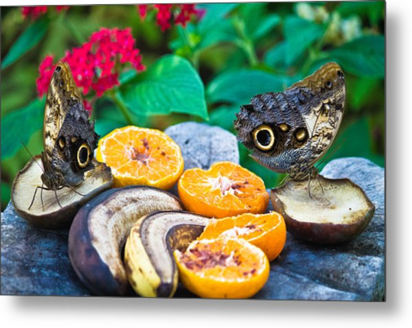 Fruit Of Life Metal Print