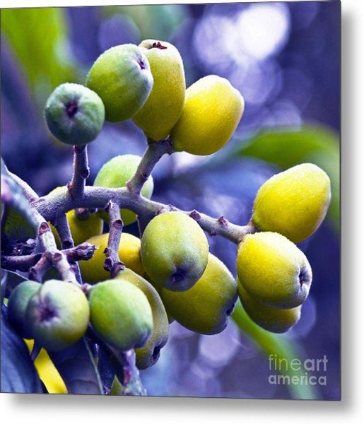 Sicilian Fruits Metal Print