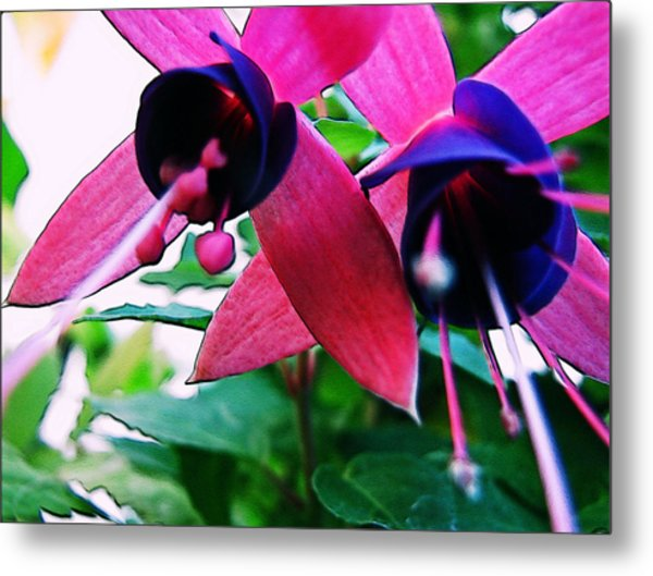 Fuchsia Abstraction Metal Print