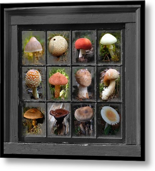 Fungus By Windowlight Metal Print