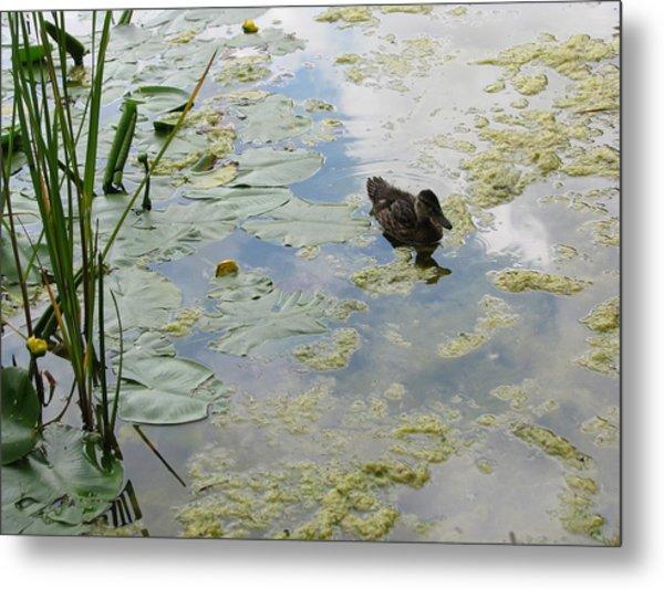 Garden Duck Metal Print by Audra Crouch