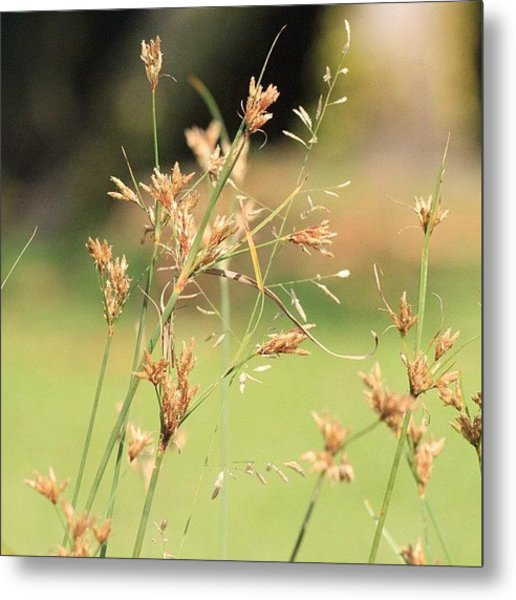 Garden Grass From A Different Angle, By Metal Print