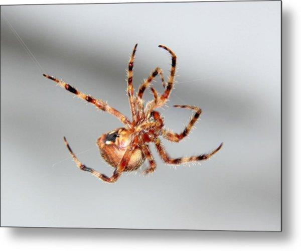 Garden Spider Number 1 Metal Print