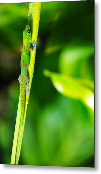 Gecko On A Stick Metal Print