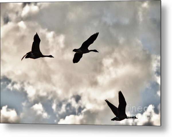 Geese Against The Sky Metal Print by Christopher Purcell