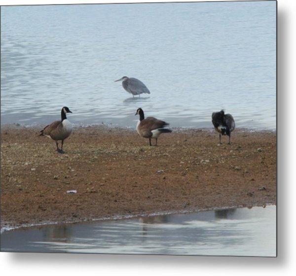 Geese And Heron Metal Print