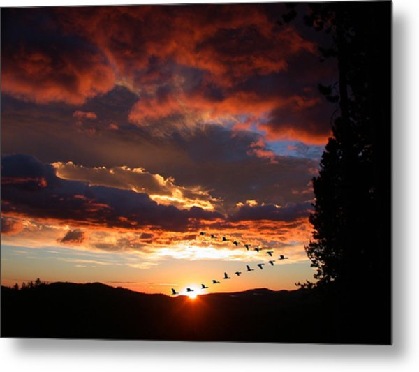 Geese Flying At Sunset Metal Print