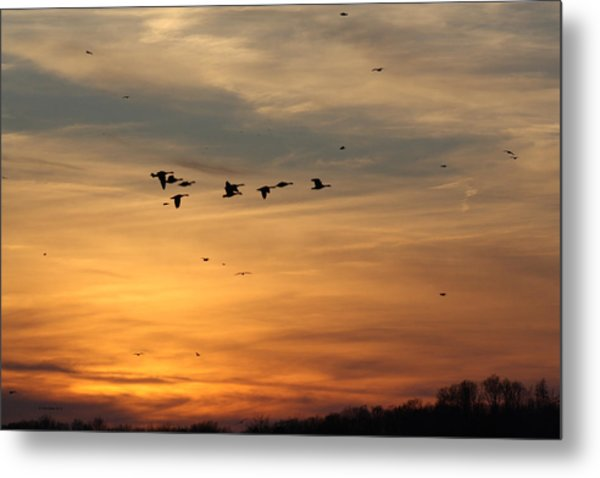 Geese In Sunset Metal Print
