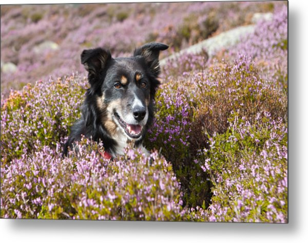 Gelert - My Dog Metal Print by Rory Trappe