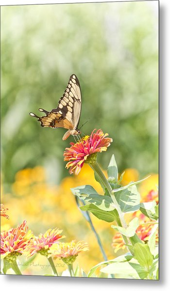Gentle Landing Metal Print by Straublund Photography