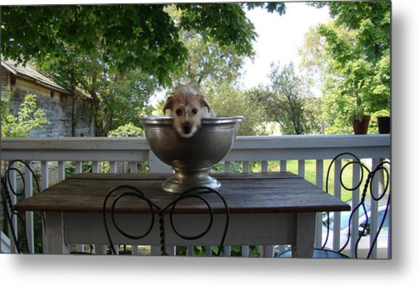 George In A Bowl Metal Print by Mark Haley